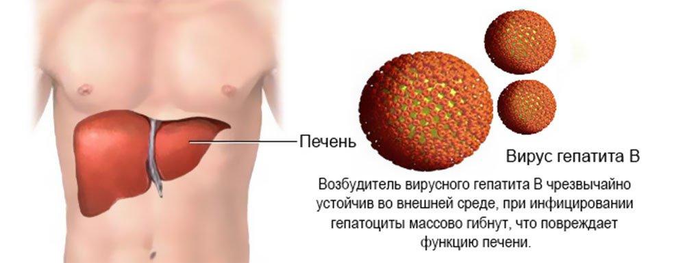 действие вируса на печень