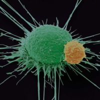 Определение и особенности генотипа вируса гепатита с